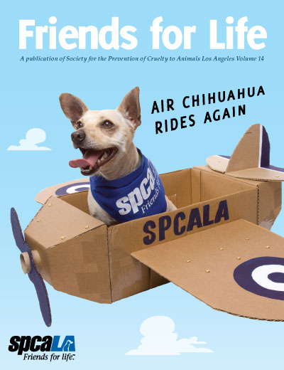 Chihuahua with bandanna in cardboard airplane